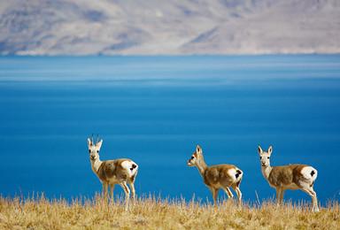 西藏阿里大北线 神山圣湖 古格王朝 一错再错13日行摄(13日行程)