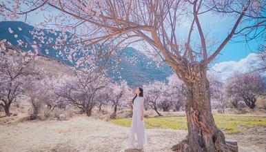 林芝桃花节 看十里桃花 山南羊湖专线 来一场粉红色的旅行(7日行程)