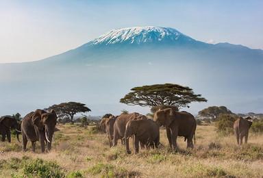 登顶非洲最高峰,看动物大迁徙(15日行程)