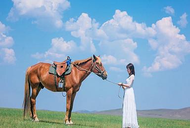 呼伦贝尔包车自助游 全国结伴 当地人带你穿越草原(7日行程)