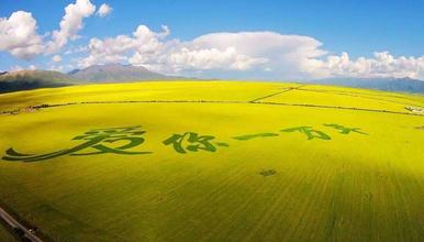 七月、八月青海湖,茶卡盐湖、祁连卓尔山,门源,赏花、大环线(8日行程)
