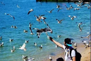 [海驴岛3日]喂海鸥·游《爸爸去哪儿》拍摄地鸡鸣岛(4日行程)