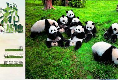 大熊猫基地 峨眉山 乐山 黄龙溪 都江堰 金沙遗址 宽窄巷子(4日行程)