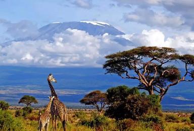 2019 | 七夕· 非洲之巅乞力马扎罗5895米登山活动(7日行程)