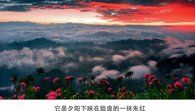 花季贵州| 漫步天上花海 探访神秘长角苗之乡 黄果树瀑布(6日行程)