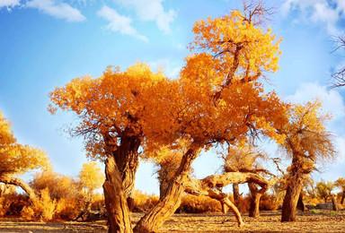 额济纳旗胡杨林 仙米彩林 黑城遗址 巴丹沙漠越野居延海(7日行程)