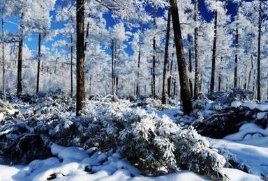 冰情雪韵哈尔滨 穿越林海雪谷 童话雪乡 魔界 长白山 吉林雾凇岛深度体验之旅(7日行程)