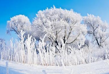 长白山 魔界 雾淞岛 雪乡 雪谷 穿越林海雪原 品东北美食(6日行程)