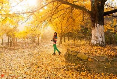 绿锐户外带你探寻银杏谷 3000年的最美秋色(2日行程)