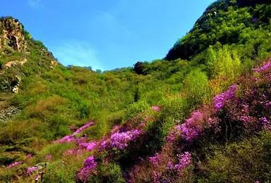 在大山里赏杜鹃花(1日行程)