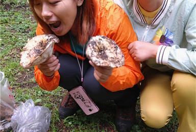 采蘑菇专题 周六 周天 邀您到南山山区采蘑菇休闲一日徒步(1日行程)