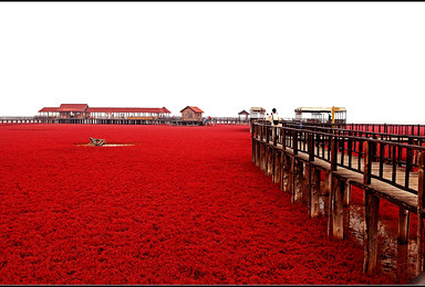 相约世界奇观红海滩 走神路 上笔架山休闲摄影活动(3日行程)