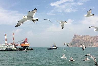 中秋国庆 海上蓬莱长岛  近距离喂食海鸥 拍片吃海鲜(4日行程)