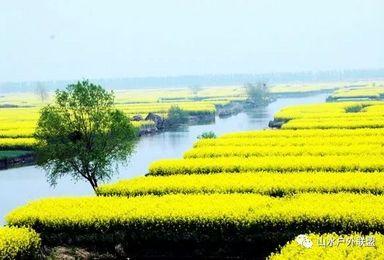 周末2日 扬州 水上油菜花 李中水上森林 瘦西湖 何园(2日行程)
