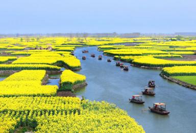 周末火车 烟花三月下扬州 水上油菜花李中水上森林瘦西湖(2日行程)