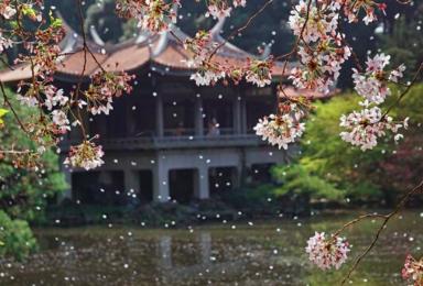 4月13日四明山 最美樱花季 享受古村慢时光(1日行程)