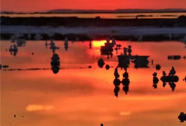 探秘青藏高原 可可西里 格尔木青海湖 茶卡盐湖(7日行程)
