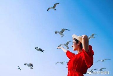 国庆长岛|海上蓬莱长岛· 近距离喂食海鸥·拍片吃海鲜~(4日行程)