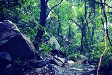 大冰沟 | 在原始峡谷丛林之间 观溪流潺潺 攀爬巨石瀑布(1日行程)