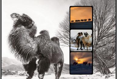 乌兰布统冰雪狂欢 万马奔腾 雪地银驼 摄影与自驾穿越(3日行程)