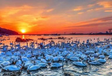 春节烟墩角 中国最美海岸·天鹅湖· 海草房·青州古城行摄(3日行程)