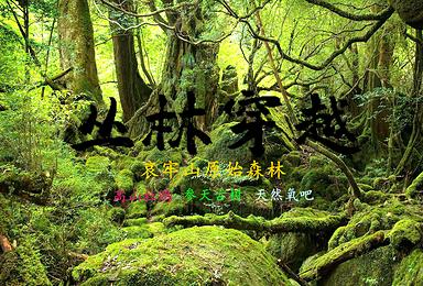 2020至2021年哀牢山 徒步穿越 原始森林(6日行程)