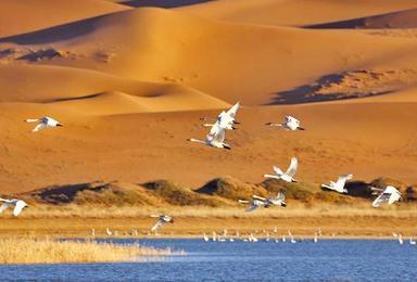 腾格里沙漠穿越, 五湖连穿 扎营仰望银河星空 休闲行摄之旅!(4日行程)