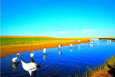 扎龙五大连池黑河漠河呼玛爱辉古城北极村最北北红村北极泉圣诞村(8日行程)