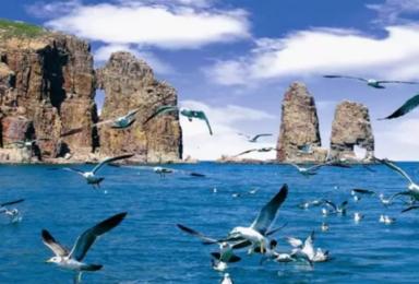端午长岛|海上蓬莱长岛· 近距离喂食海鸥·拍片吃海鲜~(4日行程)