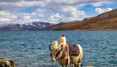 羊湖一日游 打卡西藏圣湖羊卓雍措 卡若拉冰川(1日行程)