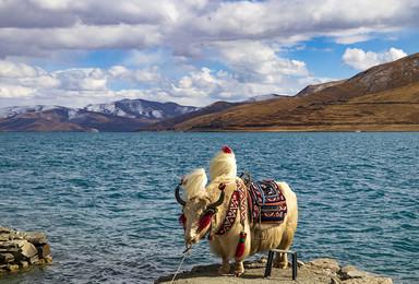 羊湖一日游|打卡西藏圣湖羊卓雍措,卡若拉冰川(1日行程)
