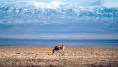 青藏线|拉萨+纳木错+可可西里+青海湖+茶卡盐湖越野纯玩之旅(5日行程)