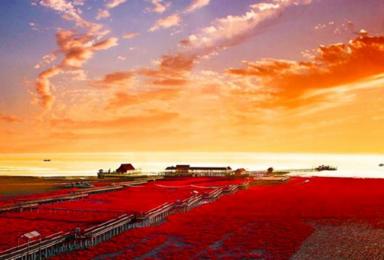 红海滩 天下奇观红海滩-神奇天路笔架山-锦州烧烤(3日行程)