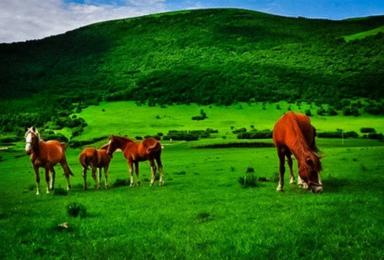草原天路 十大最美丽的公路 坝上草原七彩森林 骑马篝火烤全羊(2日行程)