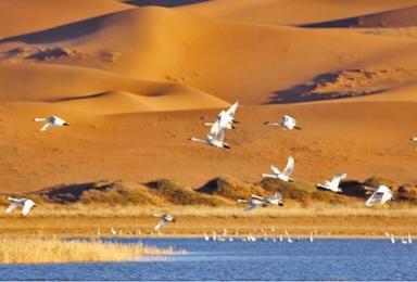 腾格里沙漠穿越, 五湖连穿(含露营装备)扎营仰望银河星空 !(4日行程)