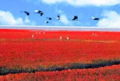 红海滩 天下奇观红海滩 神奇天路笔架山 九门口水上长城(3日行程)