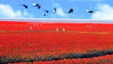 红海滩 天下奇观红海滩-神奇天路笔架山-九门口水上长城(3日行程)