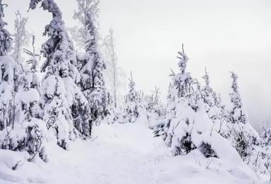 [梦幻冷极7日]全程SUV越野车 冰雪那达慕+萌宠驯鹿(7日行程)