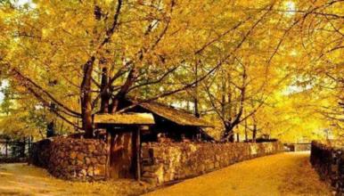 [梦幻云南7日]梅里雪山+丙中洛+腾冲银杏村/火山公园(7日行程)
