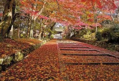 [大型活动]第二届清远16公里暨田野绿世界枫叶节(1日行程)