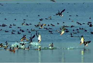 野鸭湖 北京城郊藏着的大西北 拍出芦苇漫天(1日行程)