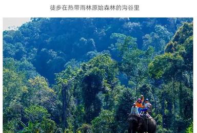 [私享版纳]彩云之南 热带雨林 西双版纳轻奢度假之旅(5日行程)