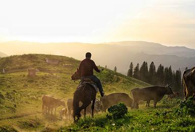 马背上的伊犁河谷5月版 | 真正的野花天堂,完美的追花时间(9日行程)