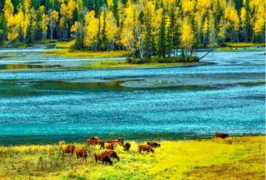 新疆喀纳斯禾木天山天池赛里木湖伊犁独库公路吐鲁番北疆东疆(13日行程)