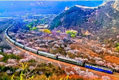 花海列车 开往春天的列车枝花正盛春光正好长城内外分外妖娆(1日行程)