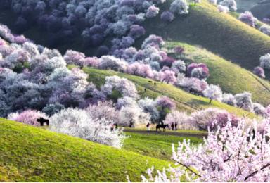 新疆天山之春—新疆伊犁杏花沟深度游(8日行程)