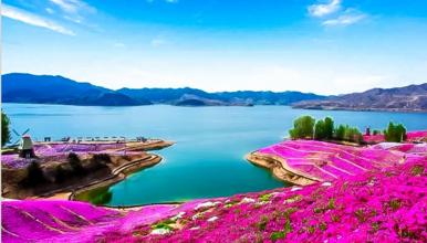 雨花谷 遇见芝樱遇见你 中国最大芝樱花海 徜徉粉色花毯(1日行程)