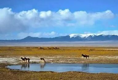 可可西里 青海湖茶卡盐湖东西台吉乃尔湖 艾肯泉 茫崖翡翠湖(5日行程)