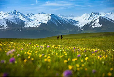 新疆独库公路 五彩滩喀纳斯禾木 赛里木湖 那拉提 巴音布鲁克(9日行程)