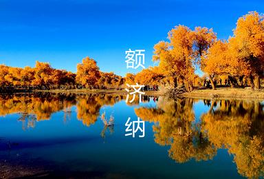 [梦幻胡杨林]额济纳胡杨林 弱水金沙胡杨林 金塔胡杨林(7日行程)